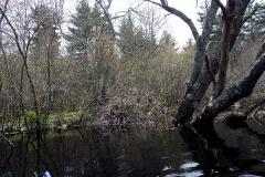 110329-Beaver-lodge-2