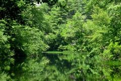 Wood-River-in-full-summer